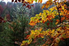 Forest detail Indian summer Royalty Free Stock Photos