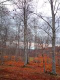 Forest detail with leafless trees in spring on a cloudy morning stock photo