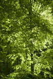Forest detail at spring time Royalty Free Stock Photography
