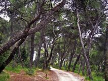 Forest. A detail from Syngrou park in Athens, Greece Royalty Free Stock Photos