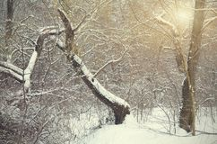 Forest detail in a winter day Royalty Free Stock Images