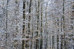 Forest detail at winter time Royalty Free Stock Photo