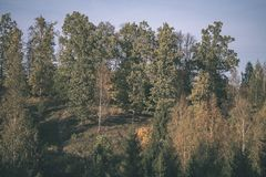 Forest details in late autumn at countryside with tree trunks, colored leaves and empty branches in sunny fall day. ground covered. In yellow leaves - vintage royalty free stock photography
