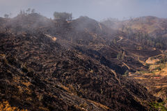 Forest devastated by fire in the mountains. Mountains of Madeira after devastating fire in summer 2016. Lot of forests being UNESCO heritage were destroyed in stock photo