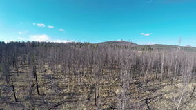 Forest devastated by a fire standing timber. Burn trees left from a forest fire stock video