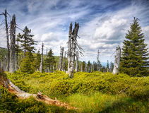 Forest Devastated National Park Royalty Free Stock Image