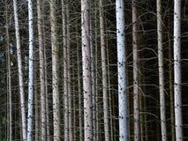 Forest Dieback Imagem de Stock Royalty Free