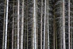 Forest Dieback Fotos de Stock