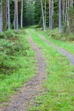 Forest dirt road Stock Image