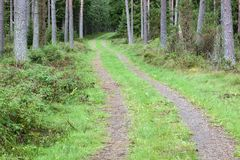 Forest dirt road Royalty Free Stock Photos