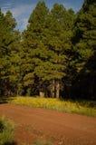 Forest Dirt Road Fotografía de archivo