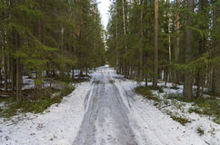 Forest dirt road in early spring. Royalty Free Stock Photo