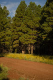 Forest Dirt Road Stock Photography