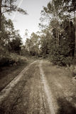 Forest dirt road in sepia. Sepia toned oldtime photo of a dirt road running through a forest Royalty Free Stock Images