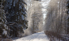 Forest dirt road in snowfall Royalty Free Stock Images