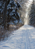 Forest dirt road in snowfall Stock Photos