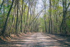 Forest dirt road in the summer. Forest landscape Stock Images