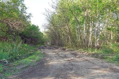 Forest dirt road in the summer. Forest landscape Royalty Free Stock Photos