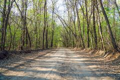Forest dirt road in the summer. Forest landscape Stock Photography