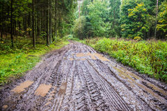 Forest dirty road Royalty Free Stock Photos