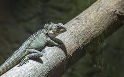 Forest Dragon auf Baum Lizenzfreie Stockfotografie