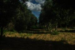Forest Dream lizenzfreie stockfotos