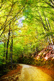 Forest dressed in autumn colors Stock Photo
