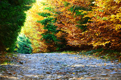 Forest dressed in autumn colors Royalty Free Stock Photos