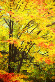 Forest dressesd in autumn colors Stock Photography