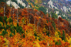 Forest dressesd in autumn colors Royalty Free Stock Photos