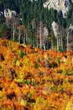 Forest dressesd in autumn colors Stock Images