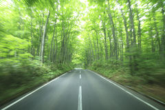 Forest drive. Speed and power Royalty Free Stock Images