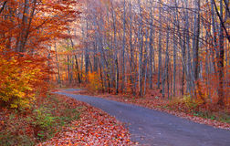 Forest drive. In autumn time Royalty Free Stock Photography