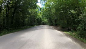 Forest driving Royalty Free Stock Photography