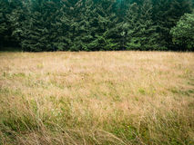 Forest and dry meadow, minimalistic natural background. Forest trees and meadow, simple natural background backdrop, without sky, nearly just duo chrome or Royalty Free Stock Image