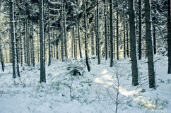 Forest duruing the winter - vintage style Royalty Free Stock Images
