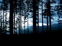 Forest at dusk Royalty Free Stock Image