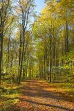 Forest in early autumn royalty free stock images