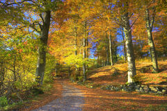 Forest in early autumn Stock Photos