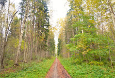 Forest at early autumn. Stock Image