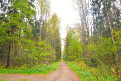 Forest at early autumn. Stock Photo