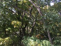 Forest, early autumn. Trees. Leaves and branches. Vladivostok nature Royalty Free Stock Photo