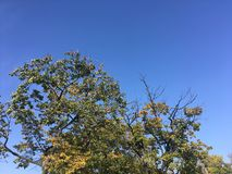 Forest, early autumn. Up view on trees. Early autumn forest. Trees, Vladivostok nature Royalty Free Stock Image
