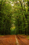 Forest in early fall Royalty Free Stock Photography