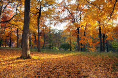 Forest in Early Fall Royalty Free Stock Images