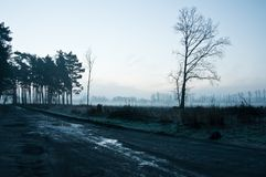 Forest in the early morning Stock Images