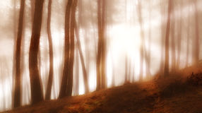 Forest in early morning fog Stock Photo