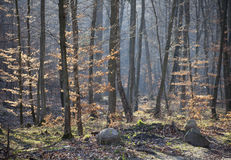 Forest in early spring Royalty Free Stock Images