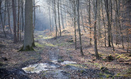 Forest in early spring Royalty Free Stock Photography
