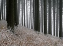 Forest in a early winter Royalty Free Stock Images
